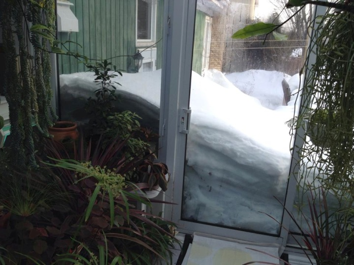 This is what 5 feet of snow looks like… from a plant's point of view.