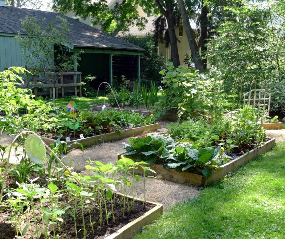 Is Treated Wood Safe in the Vegetable Garden?   Laidback
