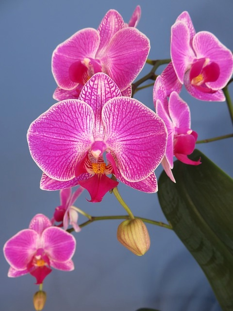 how to repot an orchid laidback gardener. Black Bedroom Furniture Sets. Home Design Ideas