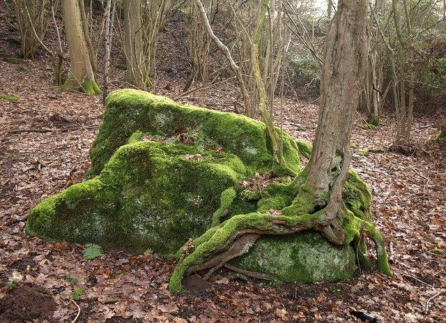 Growing Moss On Rocks Laidback Gardener
