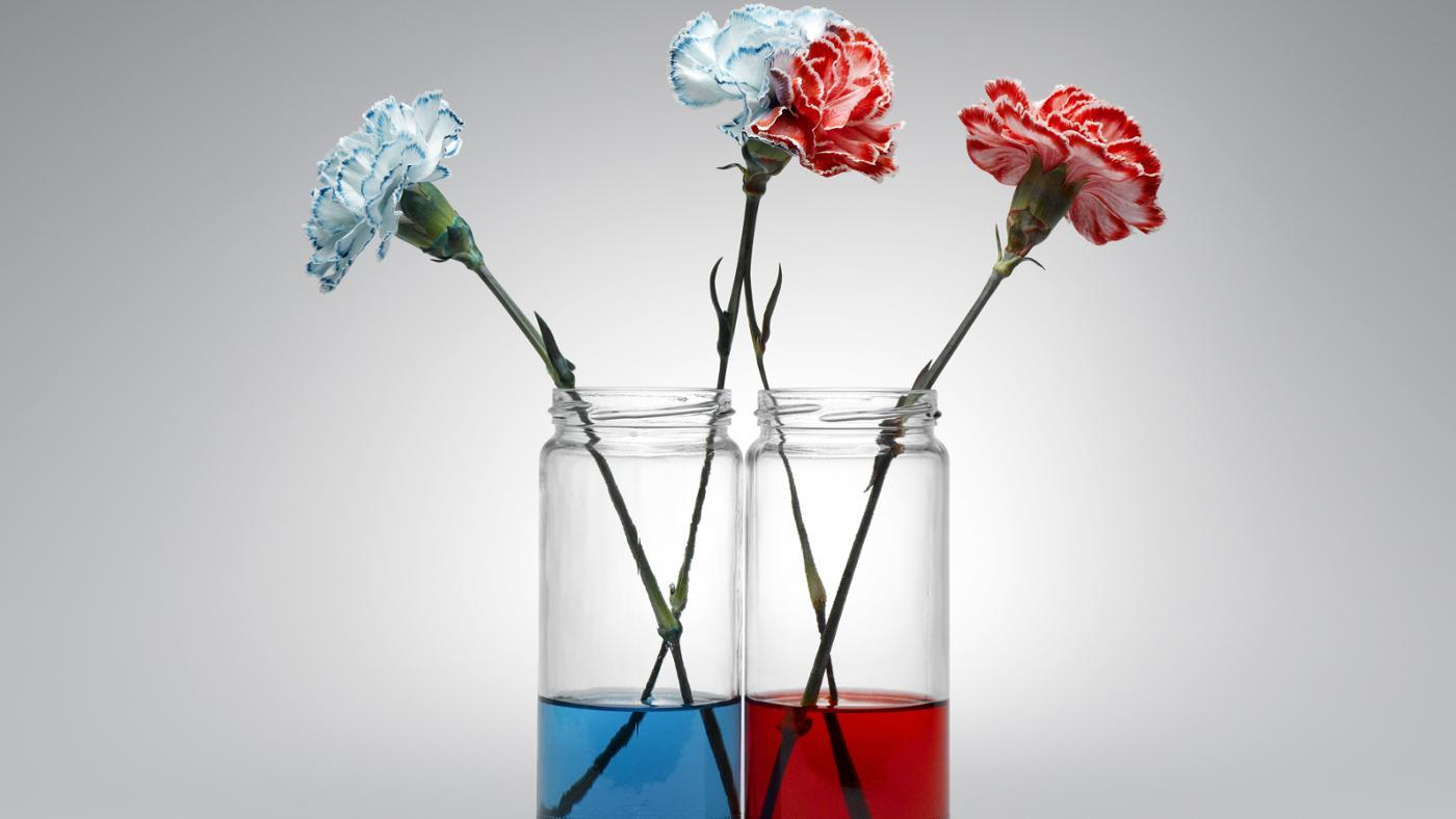Hydrogels for houseplants laidback gardener for How to dye flowers using food coloring