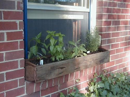 Windowbox Herbs Laidback Gardener
