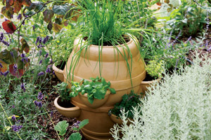 strawberry jar with herbs laidback gardener. Black Bedroom Furniture Sets. Home Design Ideas