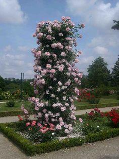 rose obelisk laidback gardener. Black Bedroom Furniture Sets. Home Design Ideas