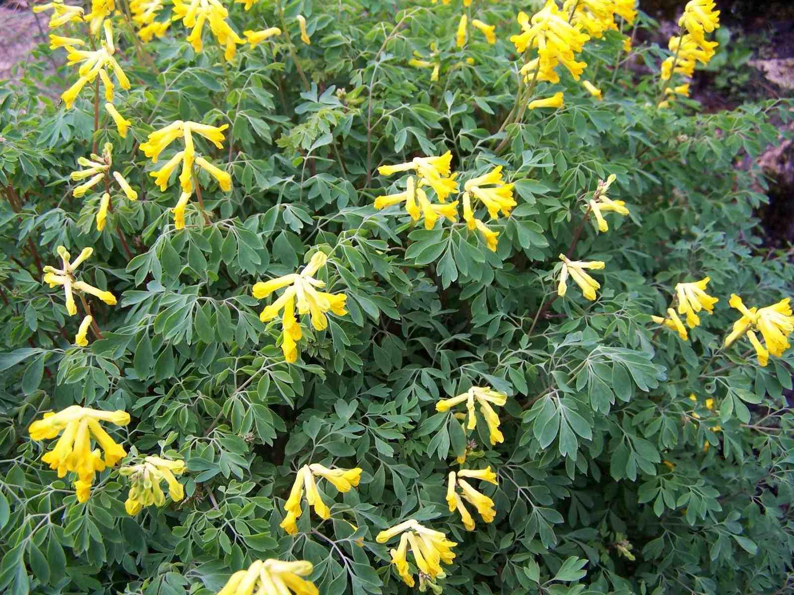 Perennials For Non Stop Bloom Laidback Gardener