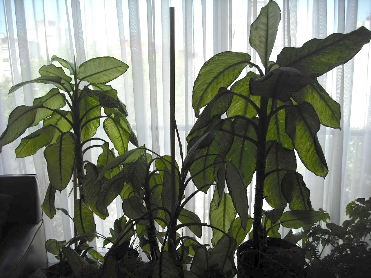 How to Dust Houseplants photo