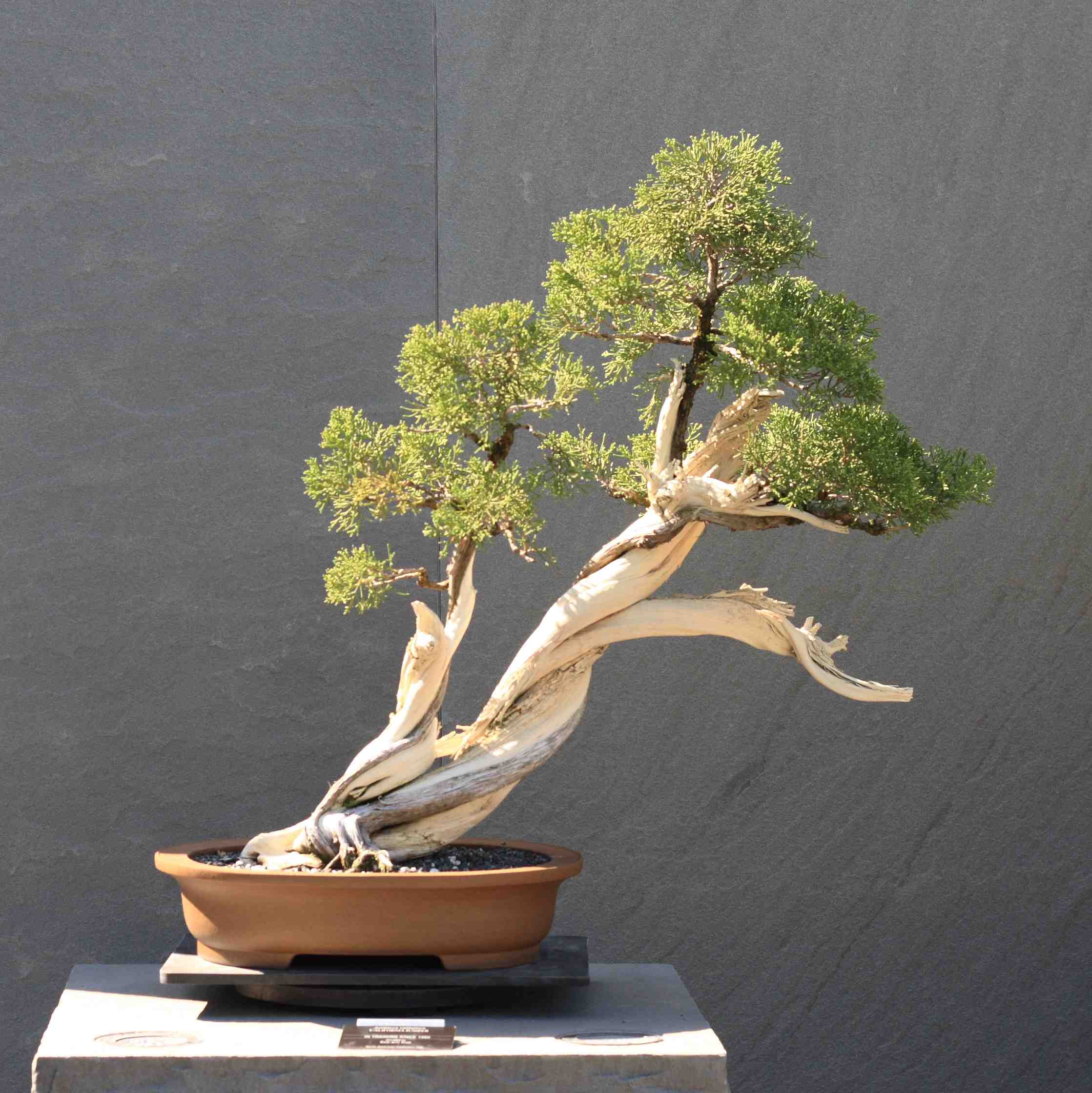 The Truth About Bonsai Laidback Gardener Wiring Styles Slant Style