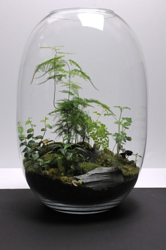 Plants Love Terrariums Laidback Gardener