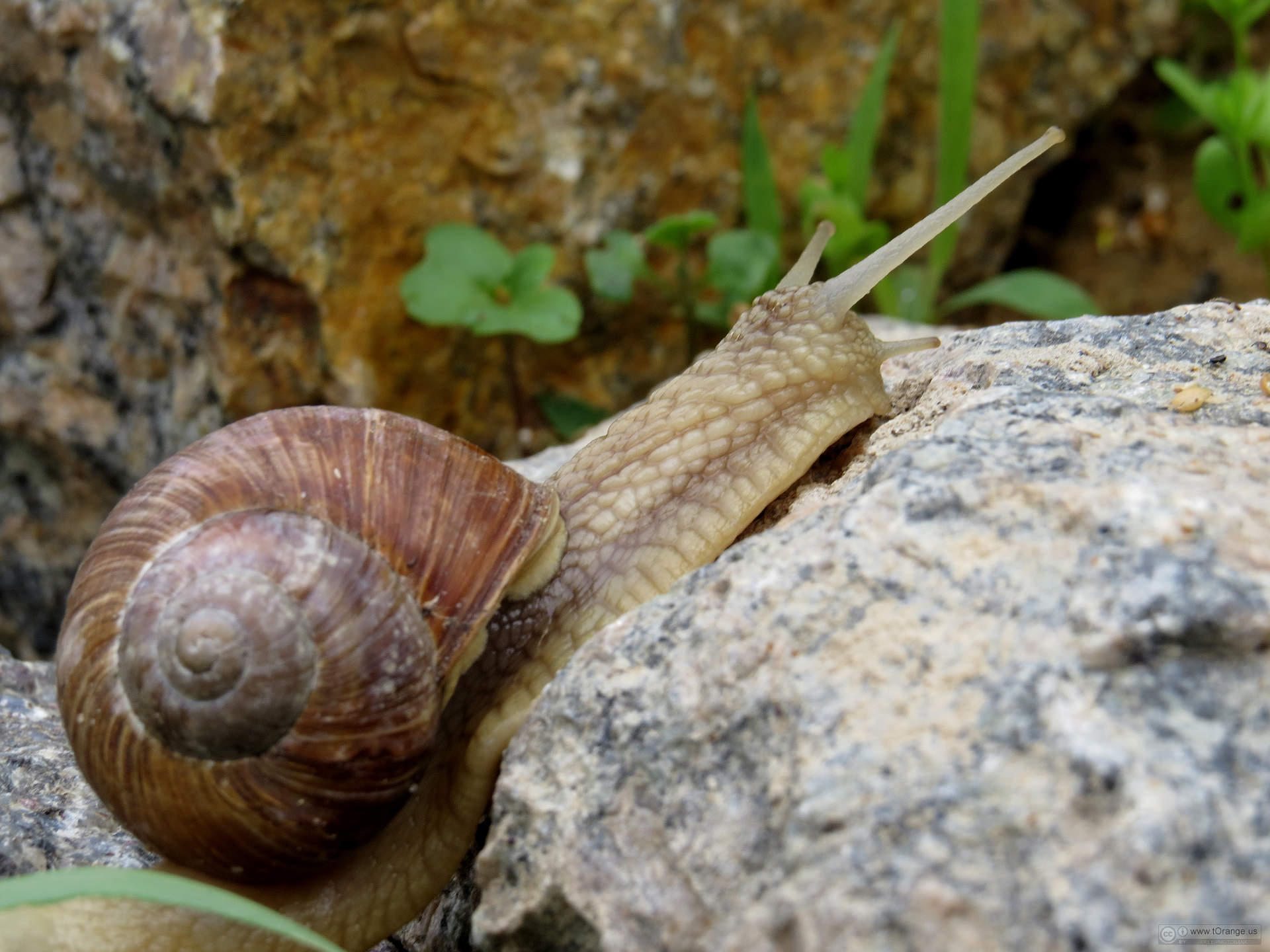 Don't Crush Those Snails: They May be Your Friends