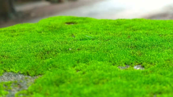 Using Lime To Control Moss Another Garden Myth Laidback Gardener