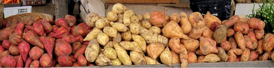Sweet potato tubers