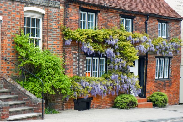 Growing Wisterias In A Cold Climate Laidback Gardener
