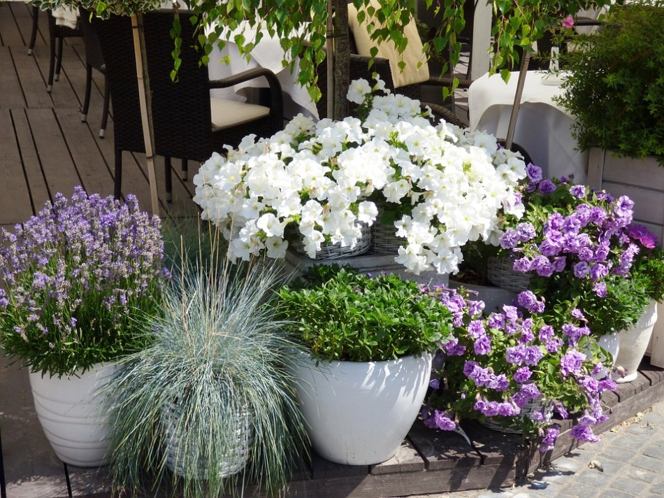 Container gardens on a deck.