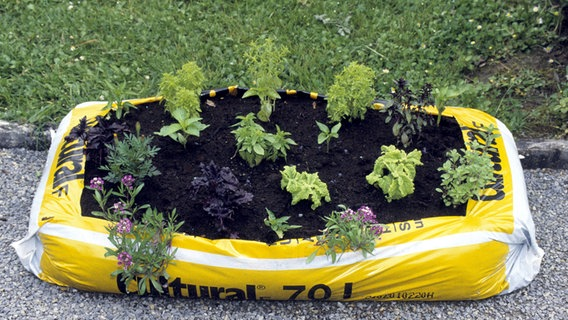 A Veggie Garden in a Bag of Soil – Laidback Gardener