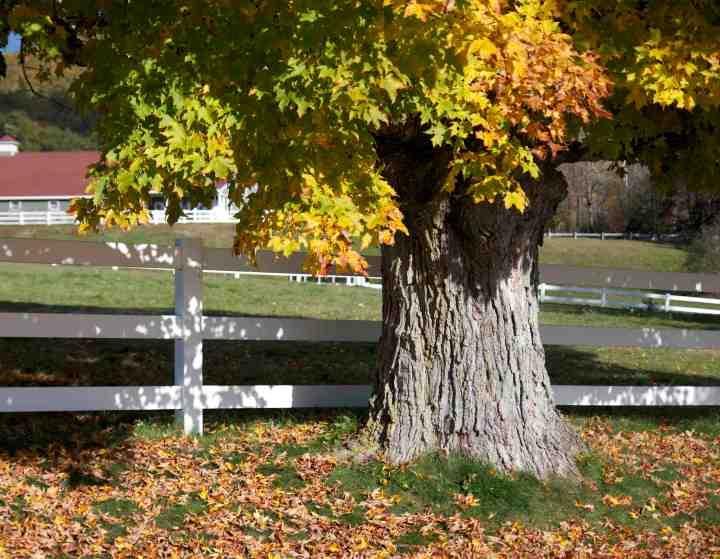 Planting near property line – Laidback Gardener