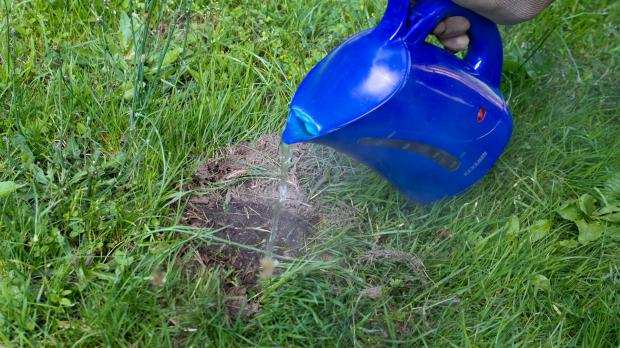 Among The Methods You Often Hear About How To Destroy Ant Nests In The  Garden Is To Pour Boiling Water On Them. More Specifically, Into The Hole  In Its ...