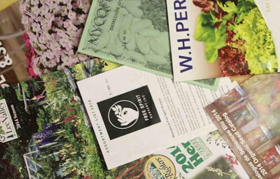 Garden and Seed Catalogs An Inexhaustible Source of Discoveries