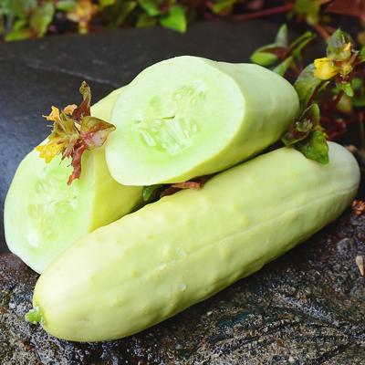 Disease Resistant Cucumbers Laidback Gardener