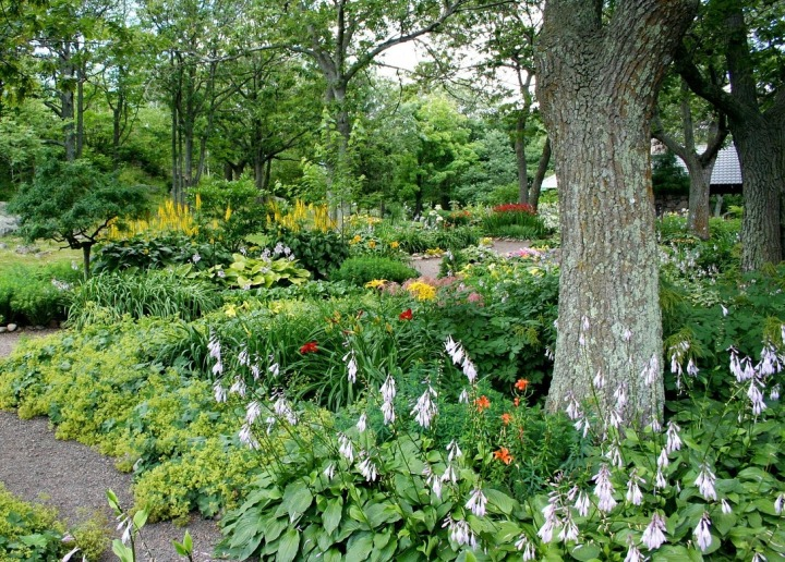 how to create a forest garden