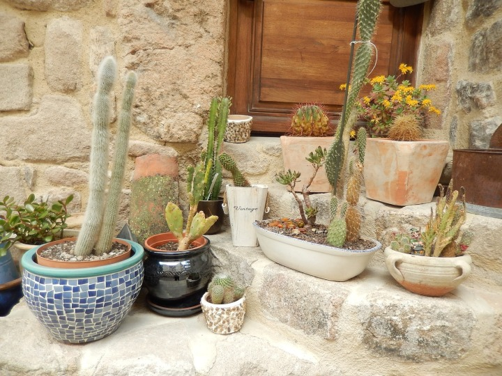 Cactus Plants Nature
