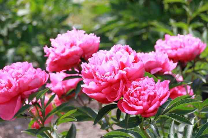 20170612J June Rose