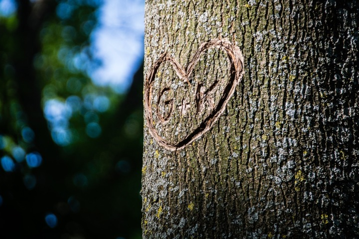Initials Carved In Tree Laidback Gardener
