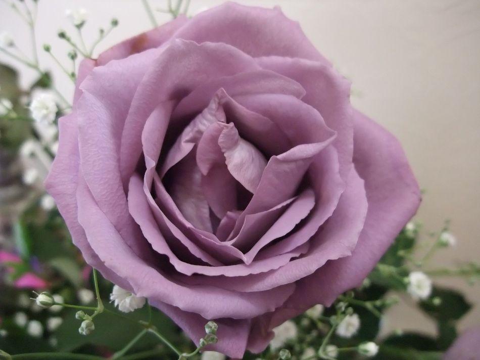 20170829C APPLAUSE Blue Rose Man, WC.jpg
