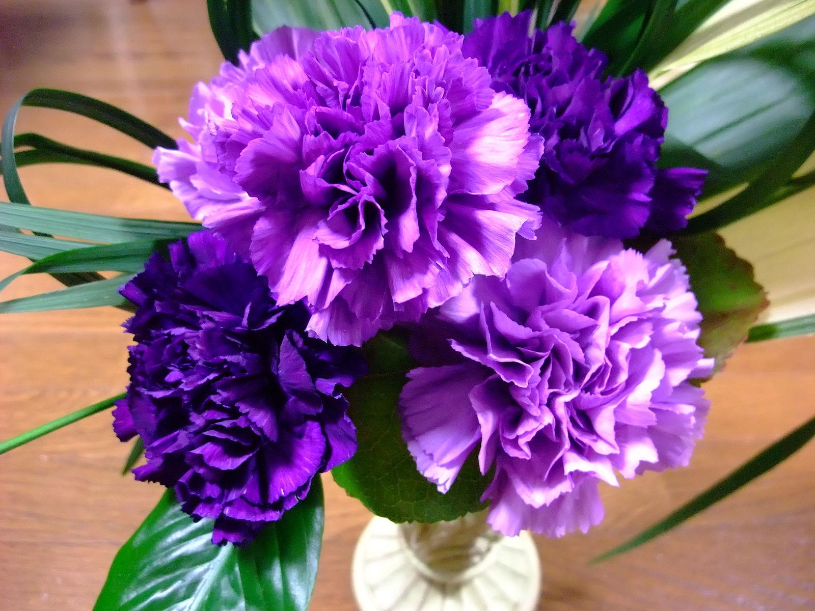La recherche de la fleur bleue jardinier paresseux for Recherche jardinier