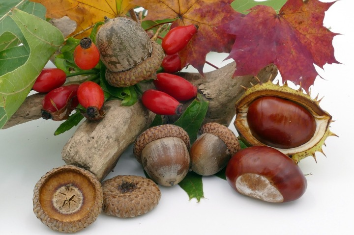 Chestnut Autumn Fruits Acorns Rose Hip