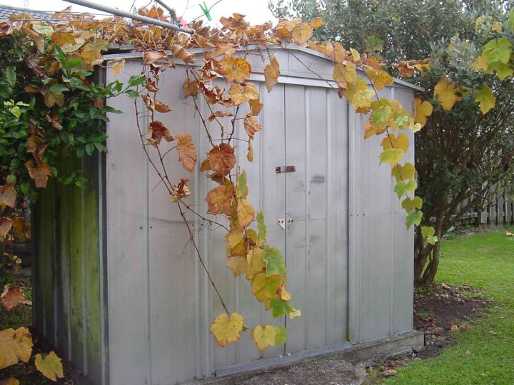 What Can You Store In A Garden Shed Over Winter