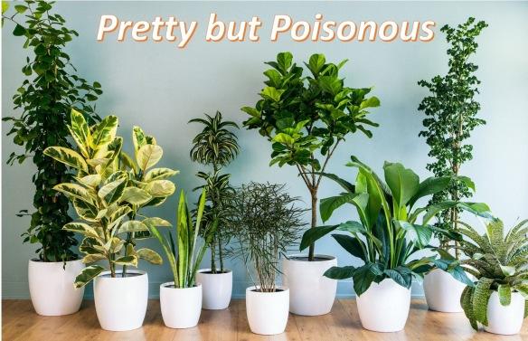 200 Poisonous Houseplants | Laidback Gardener on