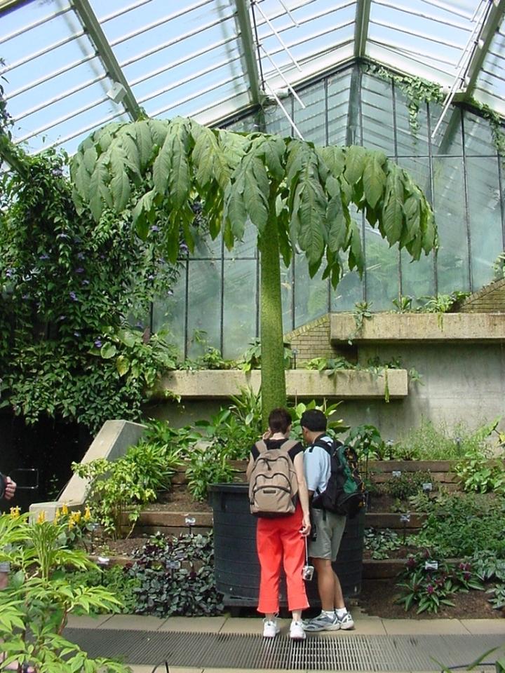 20171211D botanistspicnic.blogspot.ca.jpg