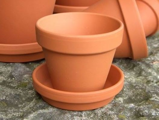 For A Green Thumb, Match Saucer Size To Pot Size