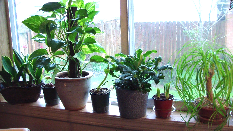 plante grimpante interieur ombre elegant with plante. Black Bedroom Furniture Sets. Home Design Ideas