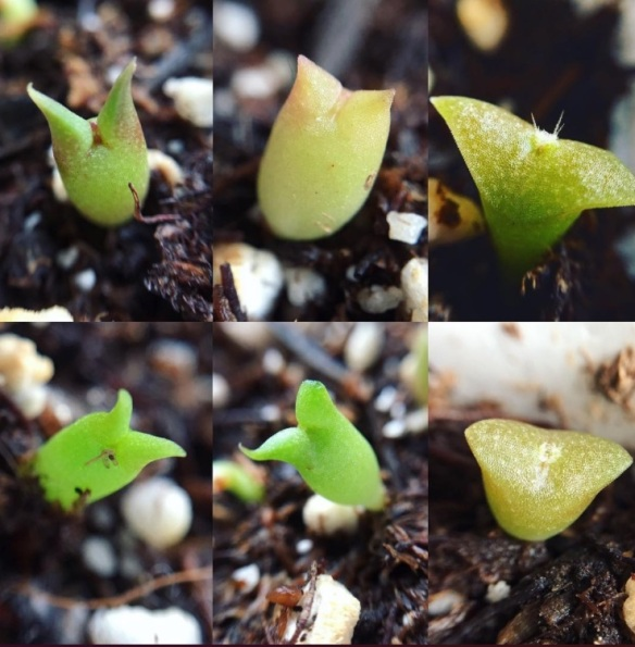 Grow Your Own Cactus from Seed | Laidback Gardener