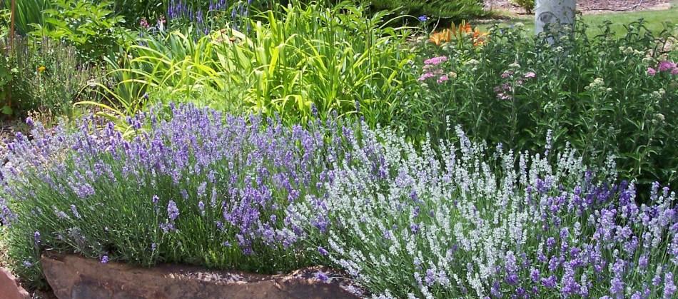 20180418G www.gardenscentsations.com.jpg
