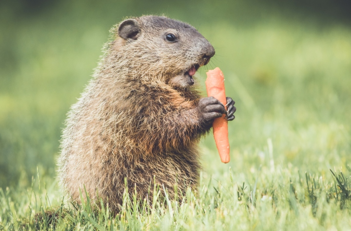 plants groundhogs tend to avoid laidback gardener
