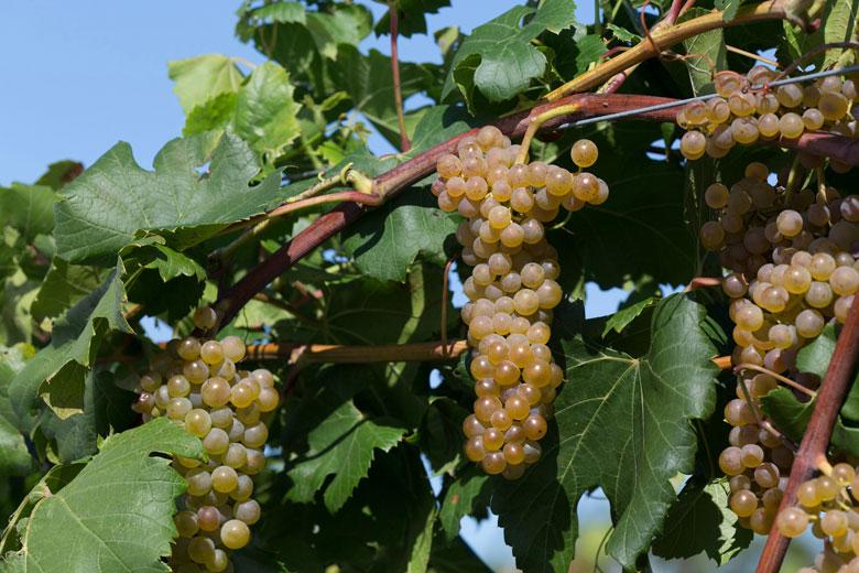 20180803B itasca www.winesandvines.com.jpg