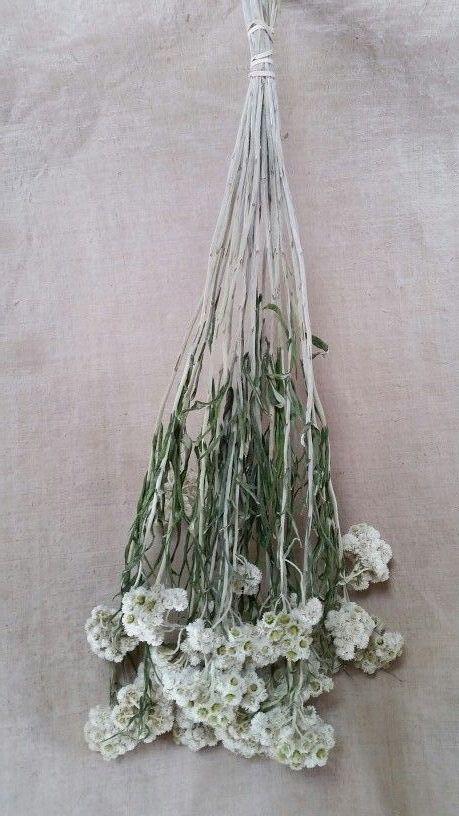 20180815D Lavender Lori, www.pinterest.ca.jpg
