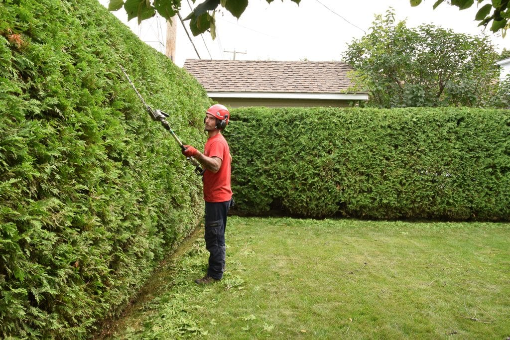 When Is The Best Time For Pruning Arborvitae Hedges