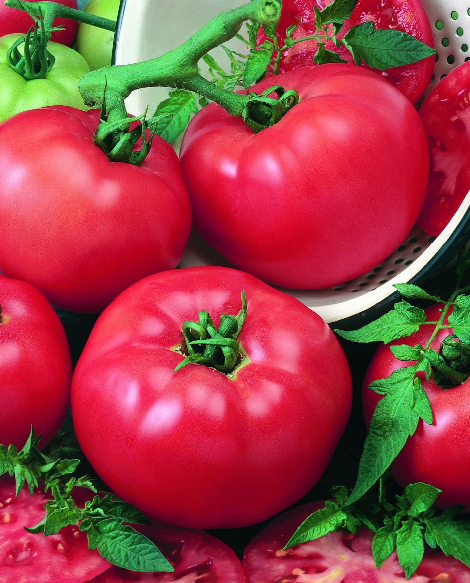 20180830M Tomato-Chefs-Choice-Red all-americaselections.org.jpg