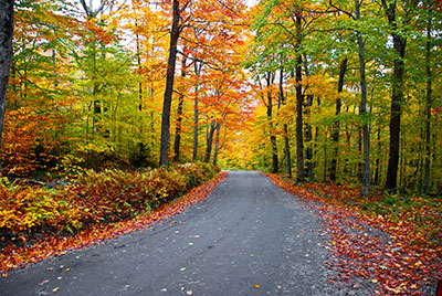 fall_color_fall_foliage_road_trip.jpg