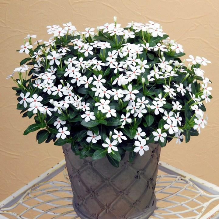Soiree-Ka-wa-i-i-White-Peppermint suntorycollection.com