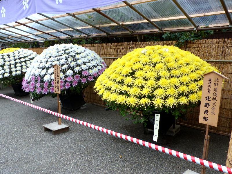 20180909C www.japantoptobottom.com.jpg