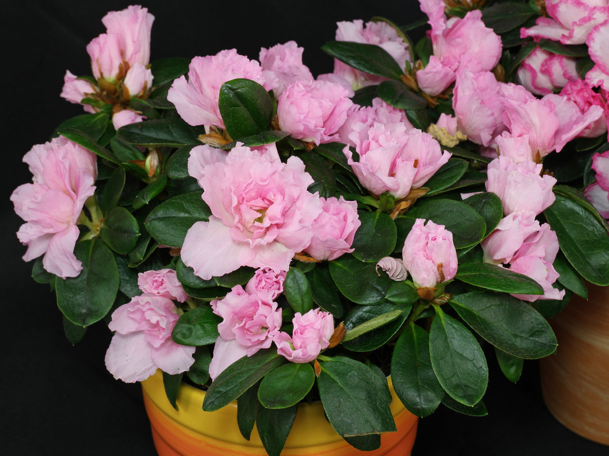 20180914C www.plantslive.in.jpg