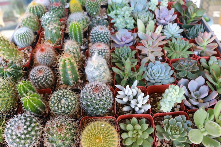 thesucculentsource.com.jpg