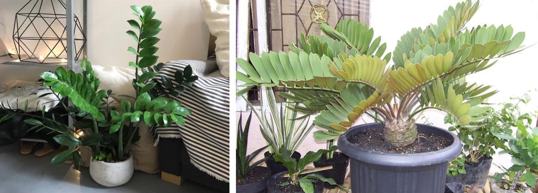 20181016C www.plantsrescue.com & www.gumtree.com.jpg