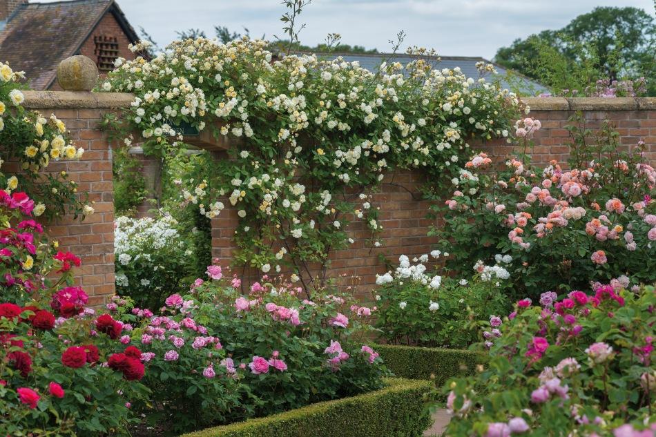 20181222H Rose Gardens.jpg