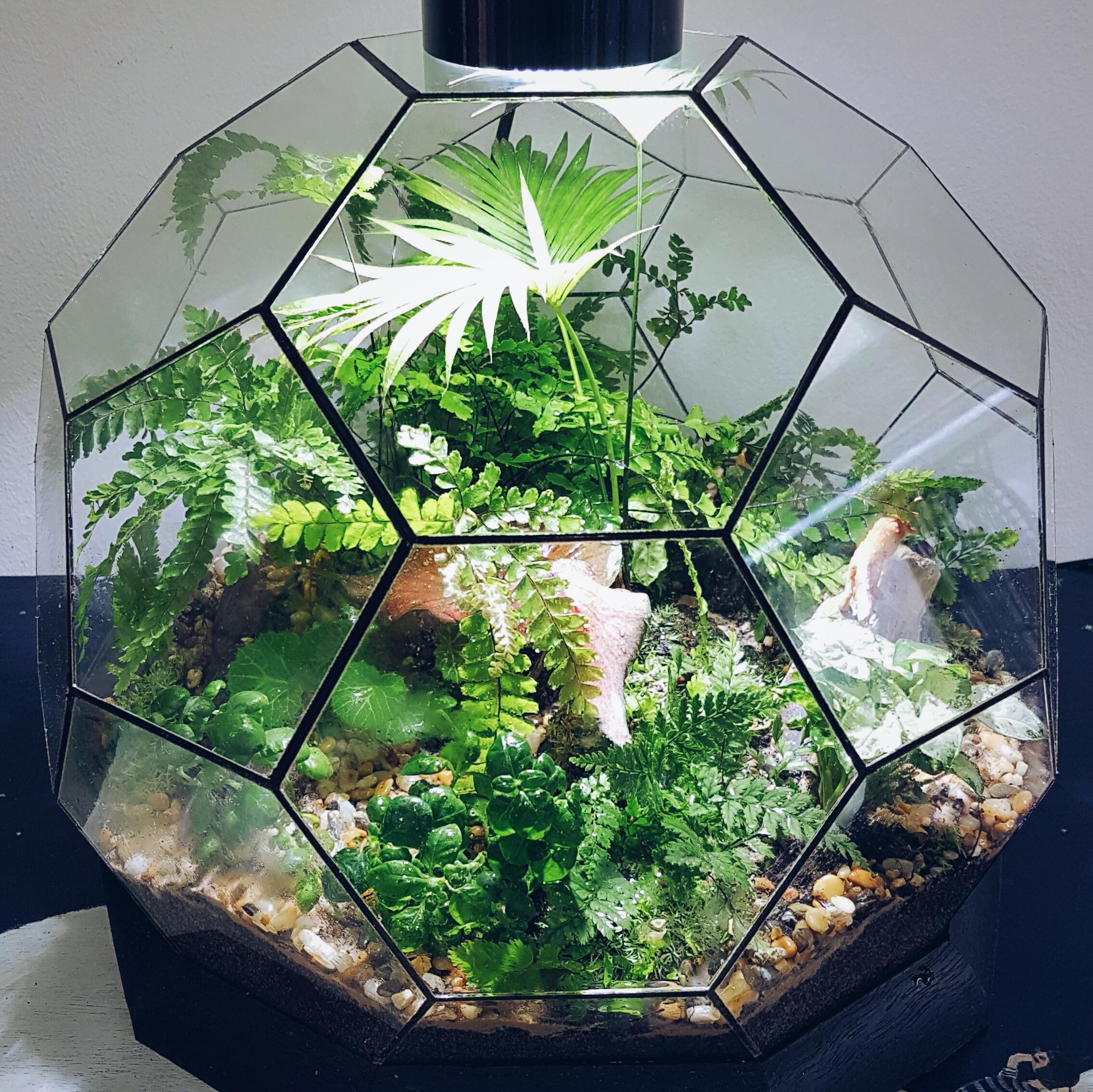 Easy Care Terrariums Laidback Gardener