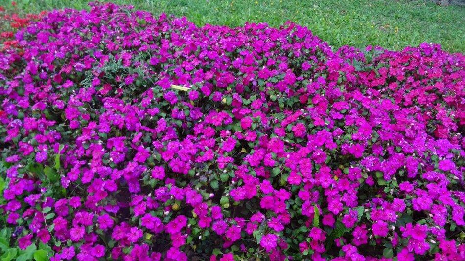 20190205D Sygenta Flowers Europe.jpg